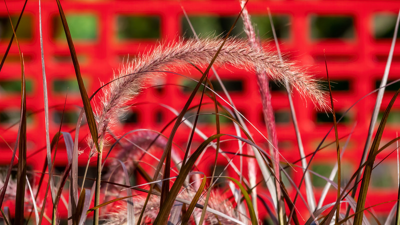 Grass 'smile', cropped to 16x9 AR