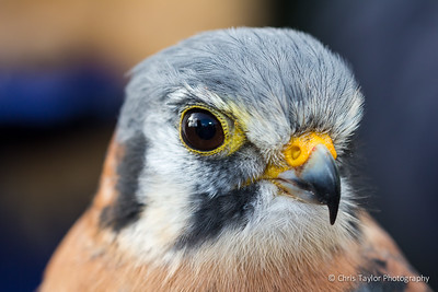 Falconry Experience March 2015