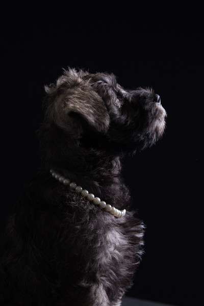 Edinburgh dog photography studio luna pearls