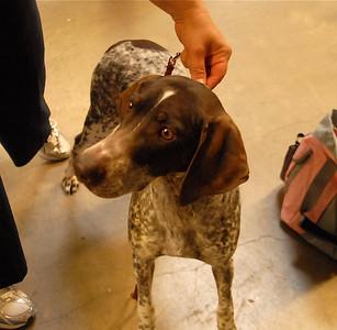 Albuq. Dogshow '09