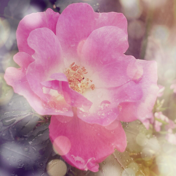PicsArt_1375813028602.jpg
