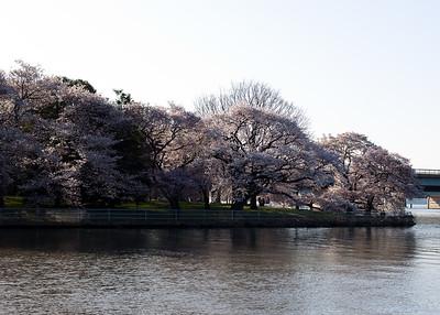 2010 March - Cherry Blossom Festival Washington DC