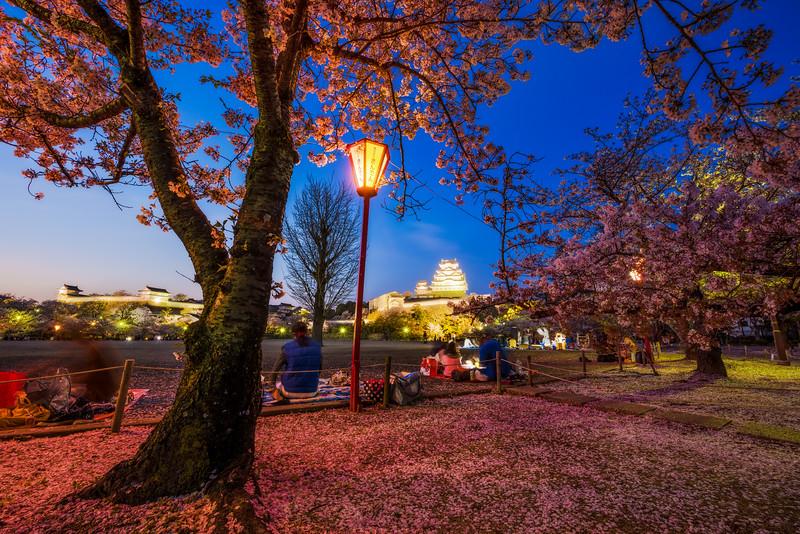 himeji-castle-japan-sakura-cherry-blossom-night-lighting-trees-wide-bricker.jpg