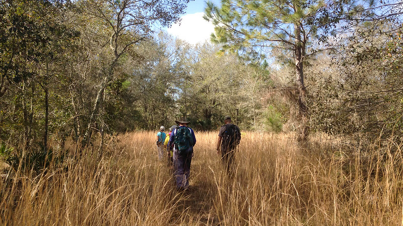 Hikers in tall grass