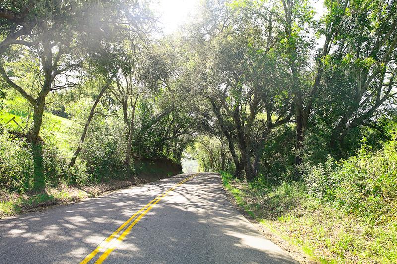 websize_Old Creek Road in Spring-0815.jpg