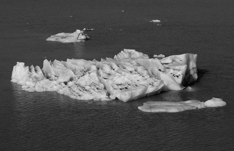 2017-08-10-Glacier-Bay-NP-284.jpg