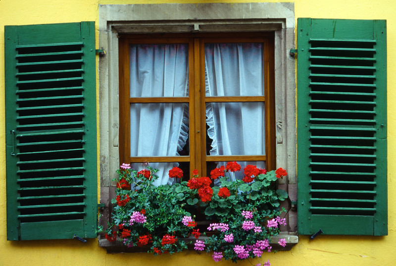 Alsatian Window Box