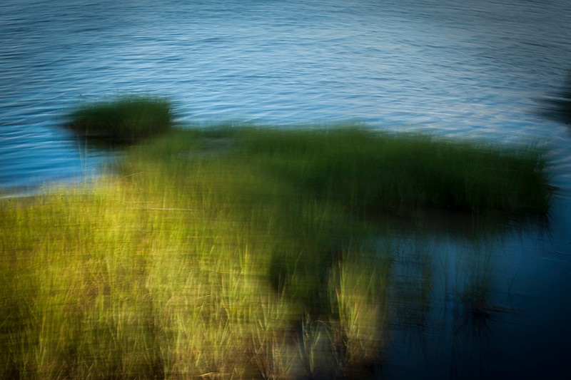Salt Marshes3.jpg