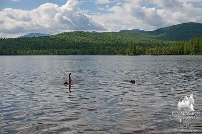 Chocorua Lake & Foss Mountain 8-24-21