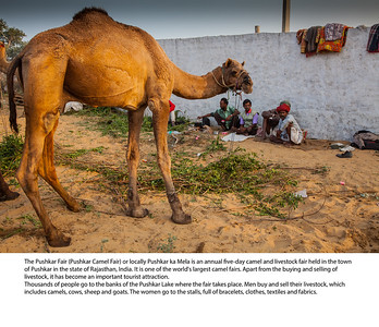 India & Pushkar Photo Book 2016