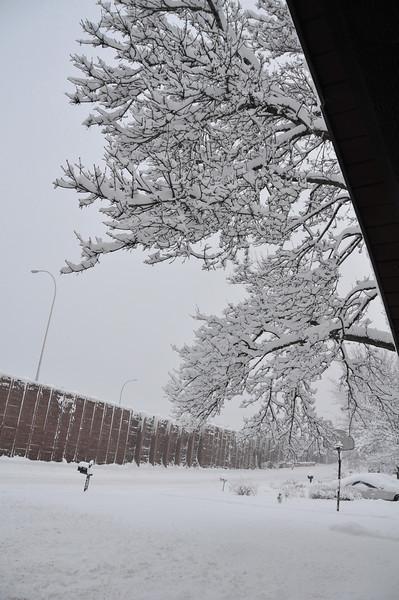 2012-12-09 First Snow of the Year - Sleeding 002.JPG