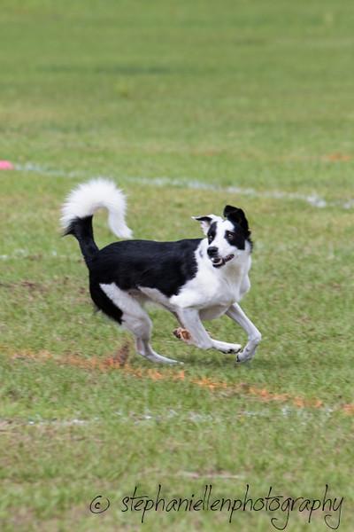 _MG_2803Up_dog_International_2016_StephaniellenPhotography.jpg