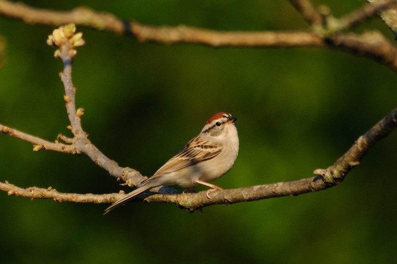 And, of course, our simple sparrows.