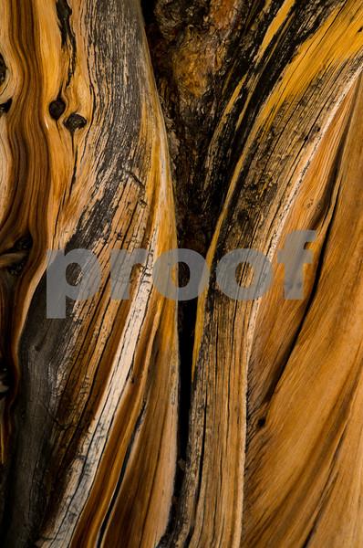 Bristlecone Pines, CA