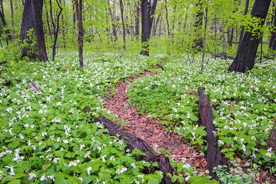 Meacham Grove Nature Preserve