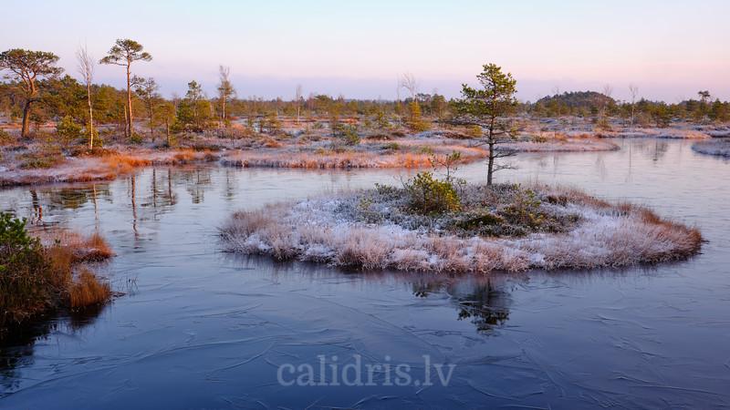 Bog lake in winter
