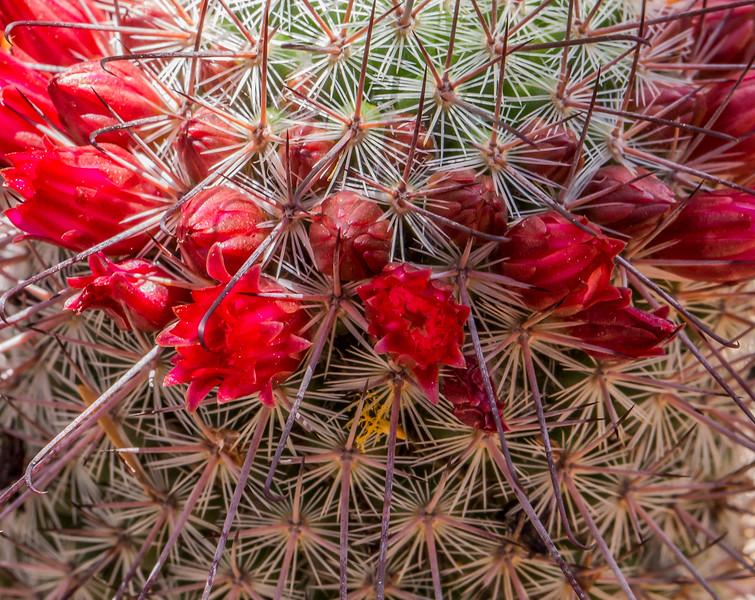 Botanical Gardens 3-28-2017b.jpg