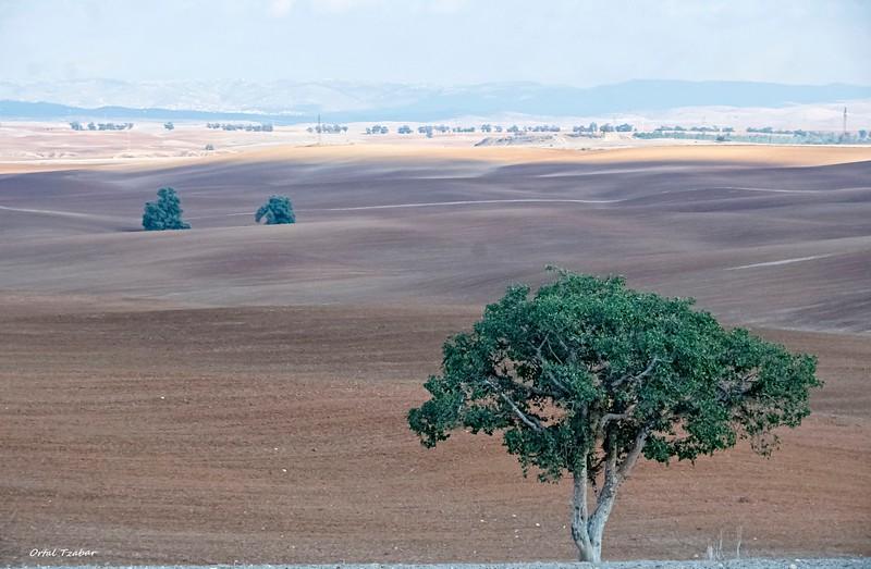 העץ בבתרונות.jpg