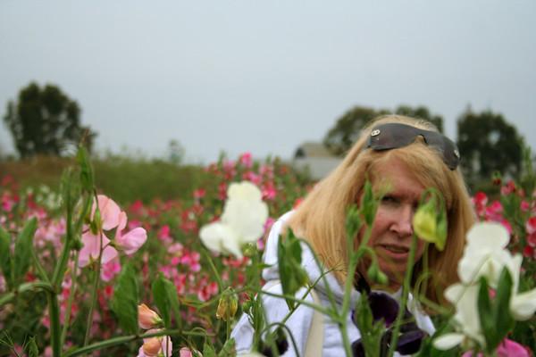 2007 - San Diego Saga: The Flower Fields
