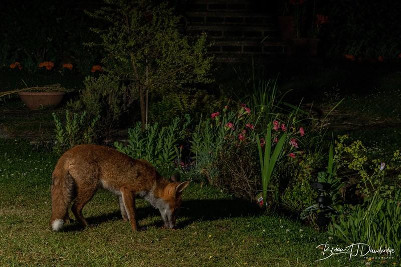 Garden Night Shoot-7274.jpg
