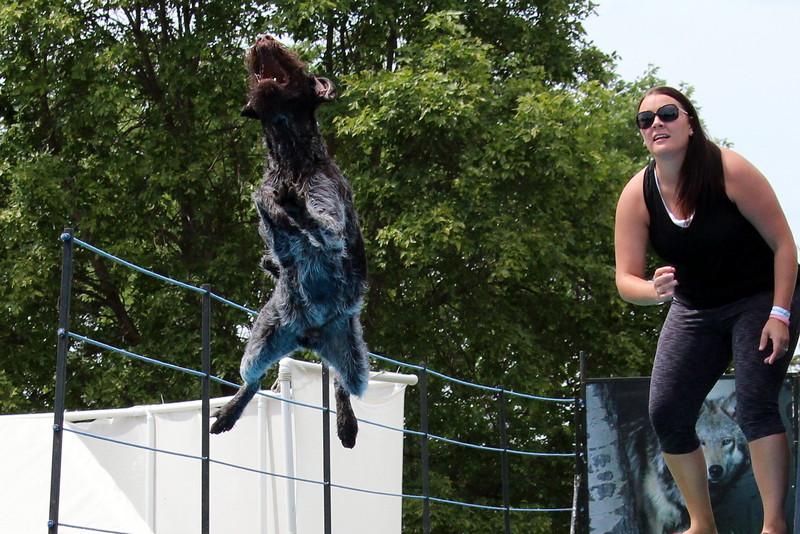 2015.8.6 Winnebago County Fair Dock Dogs (31).JPG
