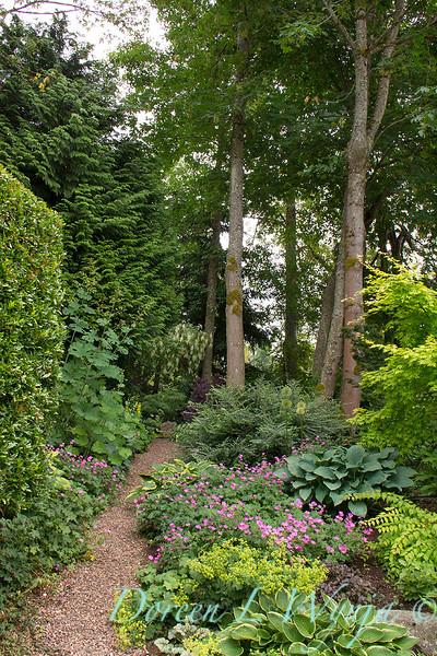 Woodland Garden - garden path_3034.jpg