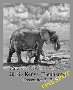 12-02-2016 Africa Kenya: Elephants