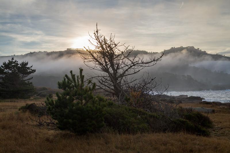 Point Lobos early morning_3357-HDR-2.jpg