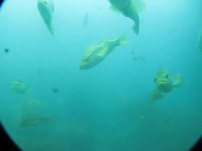 Catalina Island - 2009
