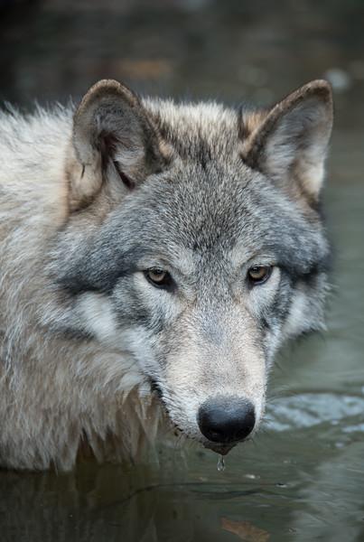 Seacrest Wolves_-10.jpg