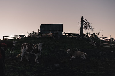 "Munții Șureanu: Stâna ""Tomnatec""   România 2014"