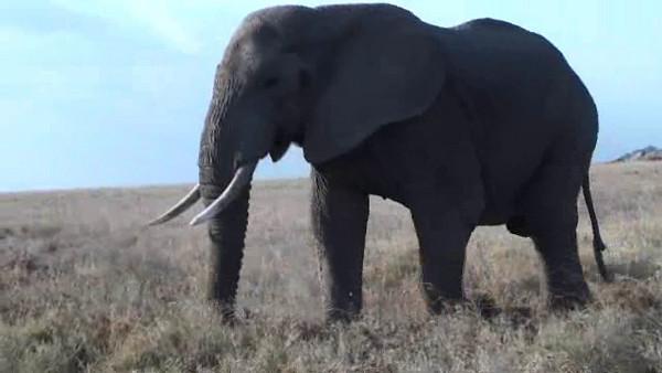 Safari Videos