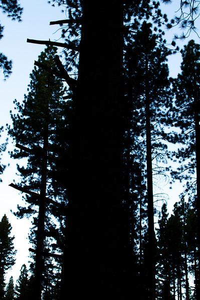 tree_303.jpg