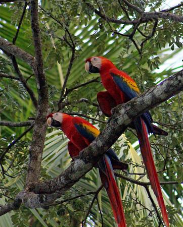 Birds (35 species)
