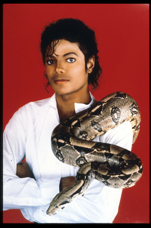 """. Entertainer Michael Jackson poses with his pet boa constrictor September 15, 1987 in the USA. Jackson, who was the lead singer for the Jackson Five by age eight, reached the peak of his solo career with 1982\'\'s \""""Thriller,\"""" the best-selling album of all time and recipient of eight Grammy awards. (Photo by Liaison)"""