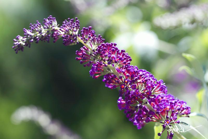 Flowers-9-2.jpg
