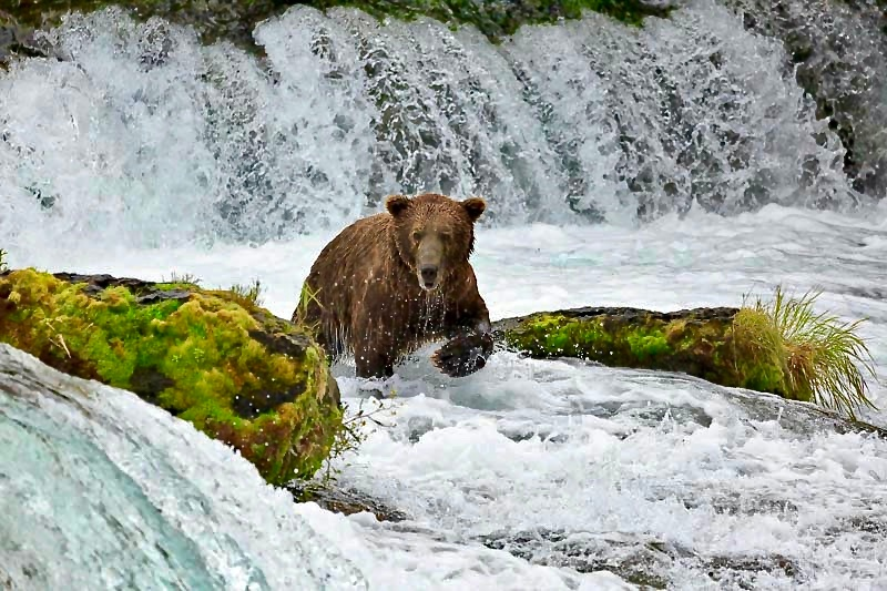 The Bear's of Katmai