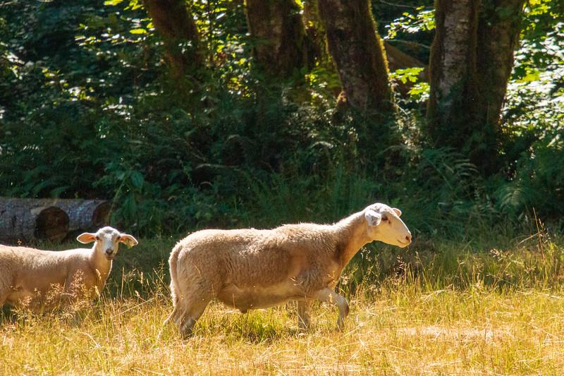 Leaping Lamb Farm-8283.jpg