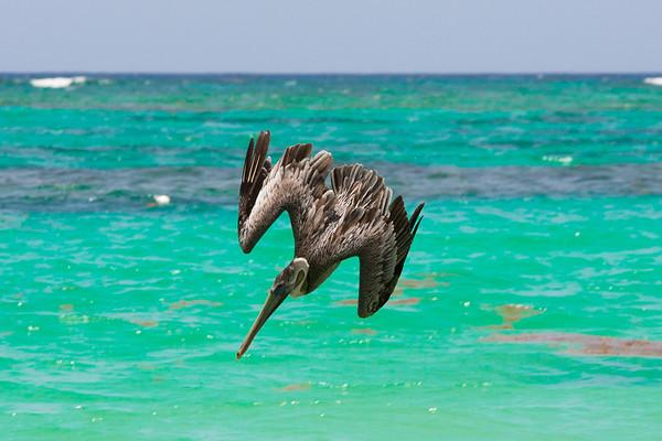 Grand Bahia Principe, Punta Cana