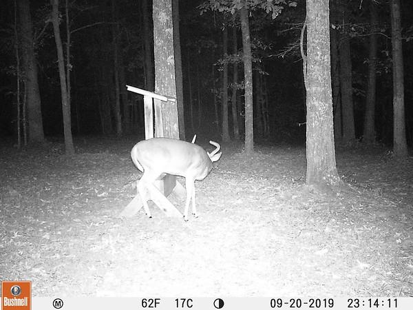 2019 Deer House