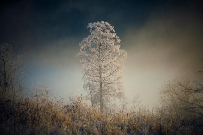 Frosty Tree.