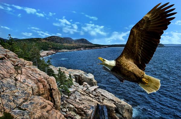 Eagle-Ocean