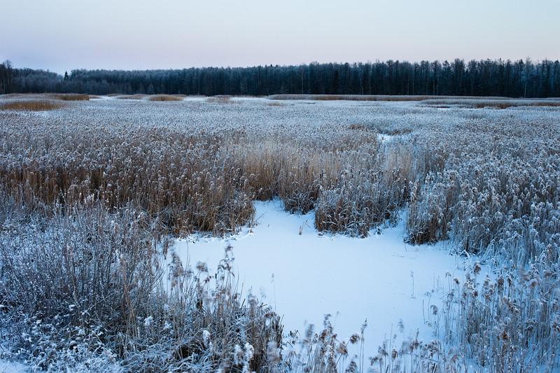 Niedru lauks Melnragu rīklē ziemā, Ķemeru nacionālais parks