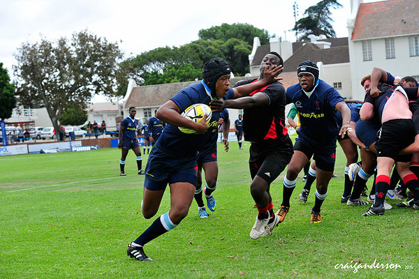 Grey Rugby Festival - Muir College vs Parktown Boys