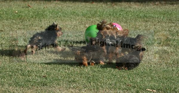 Dog Park Photography