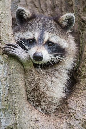 Ontario Wildlife