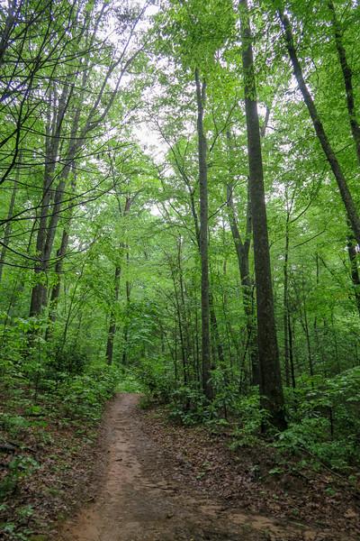 Lower Sidehill Trail -- 2,350'