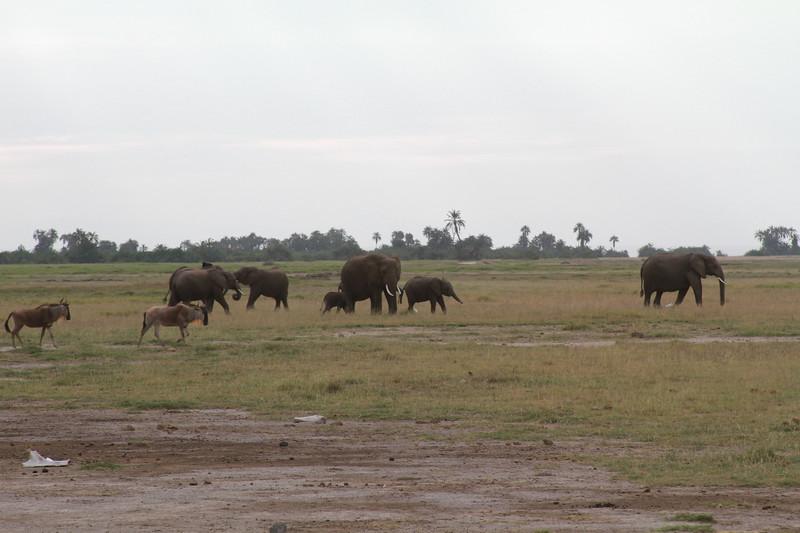 Kenya 2019 #2 297.JPG