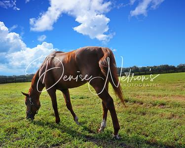 Pleasant Acres Stallions