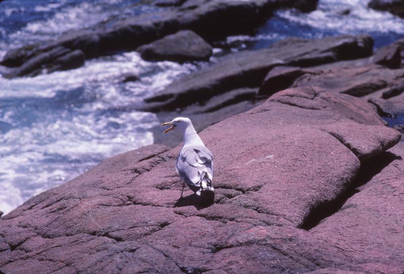 Nova Scotia 1983 - 081.jpg